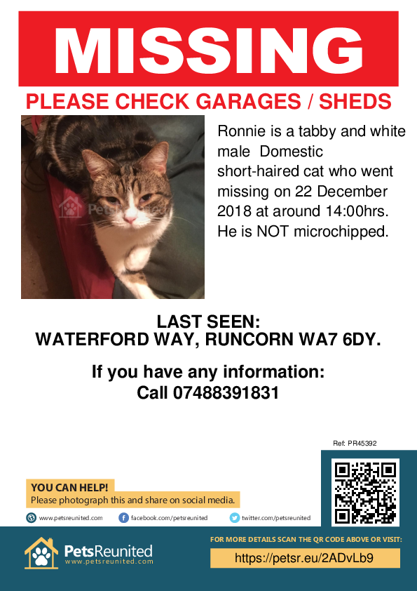 Lost pet poster - Lost cat: Tabby and white cat called Ronnie