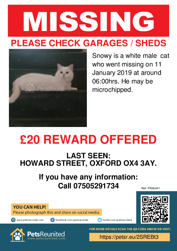 Lost pet poster - Lost cat: White cat called Snowy