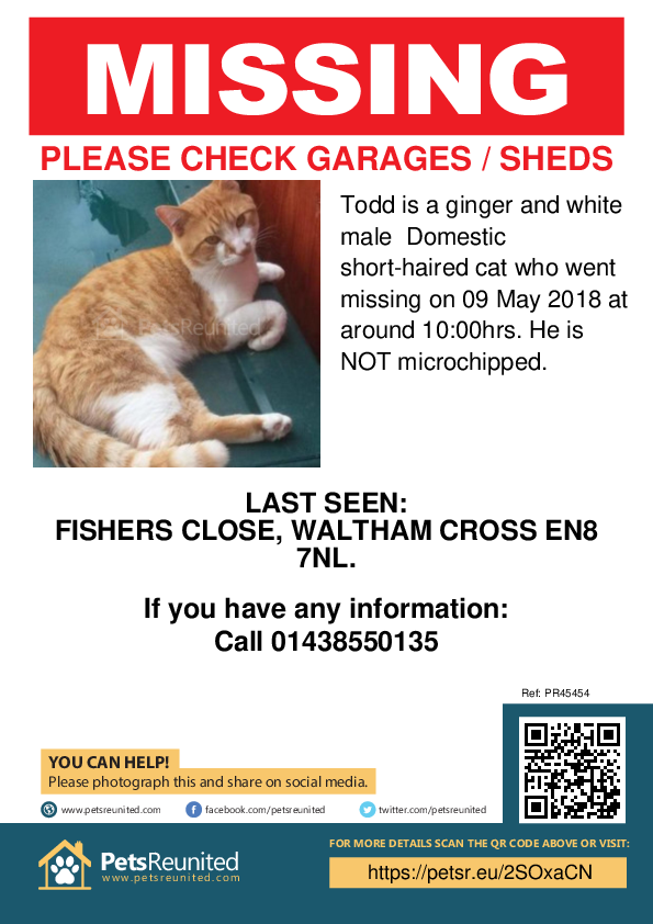Lost pet poster - Lost cat: Ginger and white cat called Todd