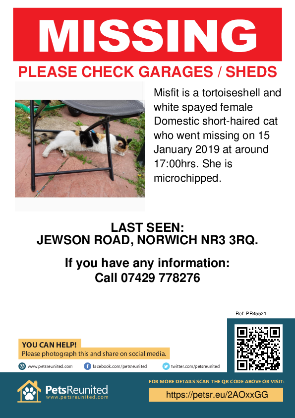 Lost pet poster - Lost cat: Tortoiseshell and white cat called Misfit