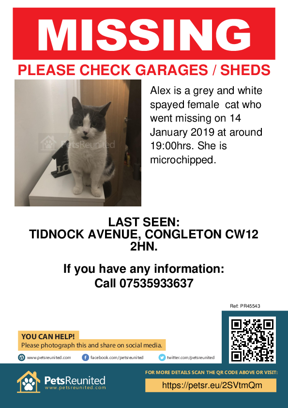 Lost cat: Grey and White cat called Alex - Congleton area