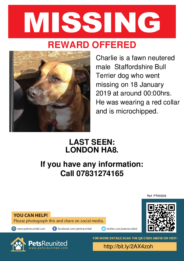 Lost pet poster - Lost dog: Fawn Staffordshire Bull Terrier dog called Charlie