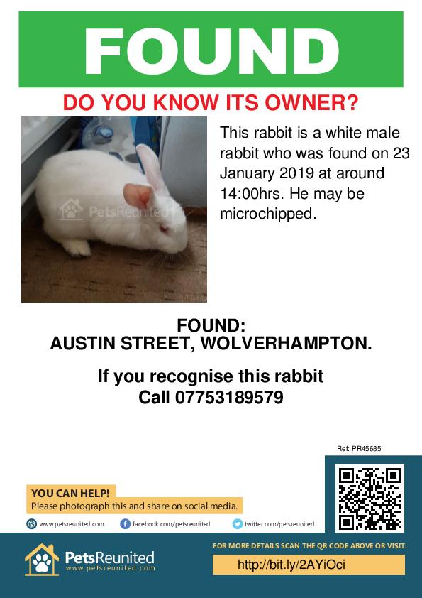 Found pet poster - Found rabbit: White rabbit