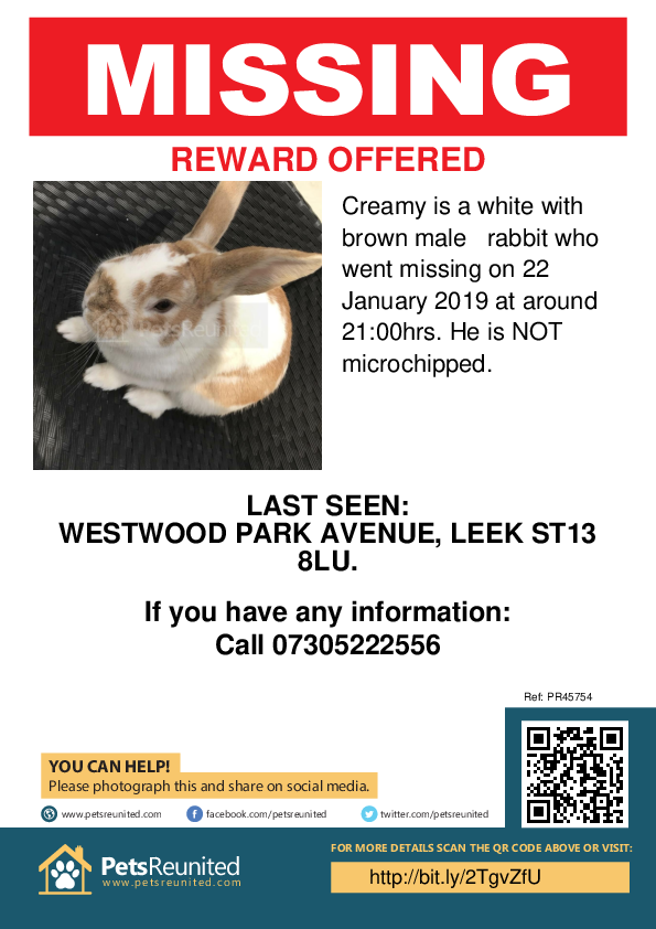Lost pet poster - Lost rabbit: White with Brown  rabbit called Creamy
