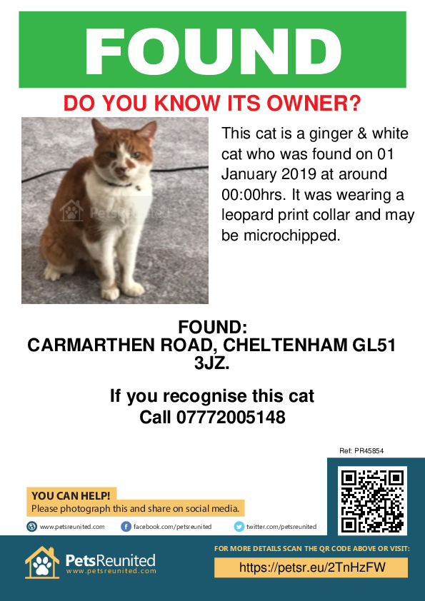 Found pet poster - Found cat: Ginger & White cat
