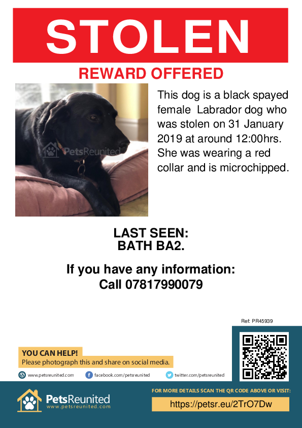 Stolen pet poster - Stolen dog: Black Labrador dog [name witheld]