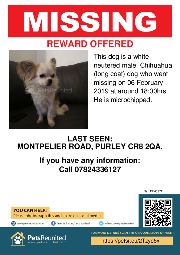 Lost pet poster - Lost dog: White Chihuahua (long coat) dog [name witheld]