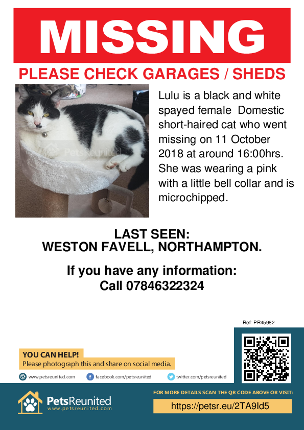 Lost pet poster - Lost cat: Black and white cat called Lulu