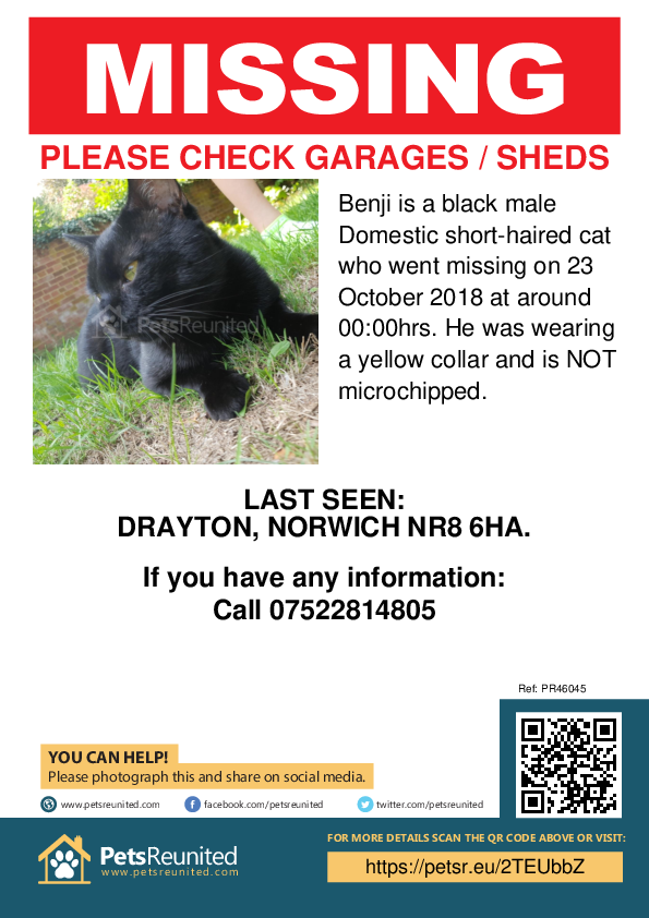 Lost pet poster - Lost cat: Black cat called Benji