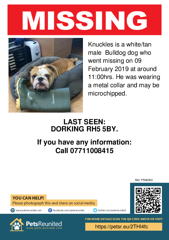 Lost pet poster - Lost dog: White/tan Bulldog dog called Knuckles