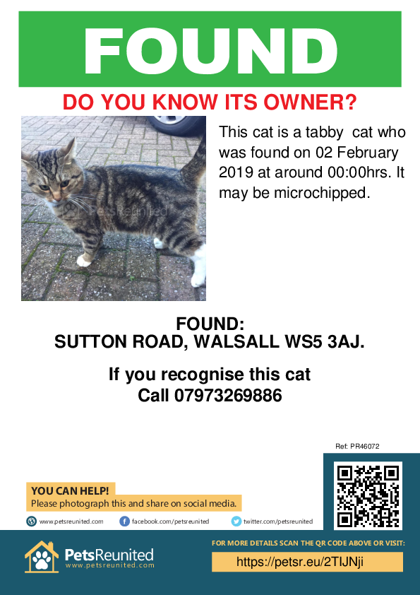 Found pet poster - Found cat: Tabby cat