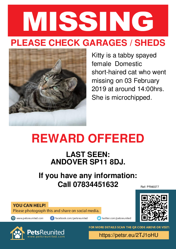 Lost pet poster - Lost cat: Tabby cat called Kitty