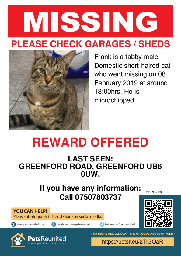 Lost pet poster - Lost cat: Tabby cat called Frank