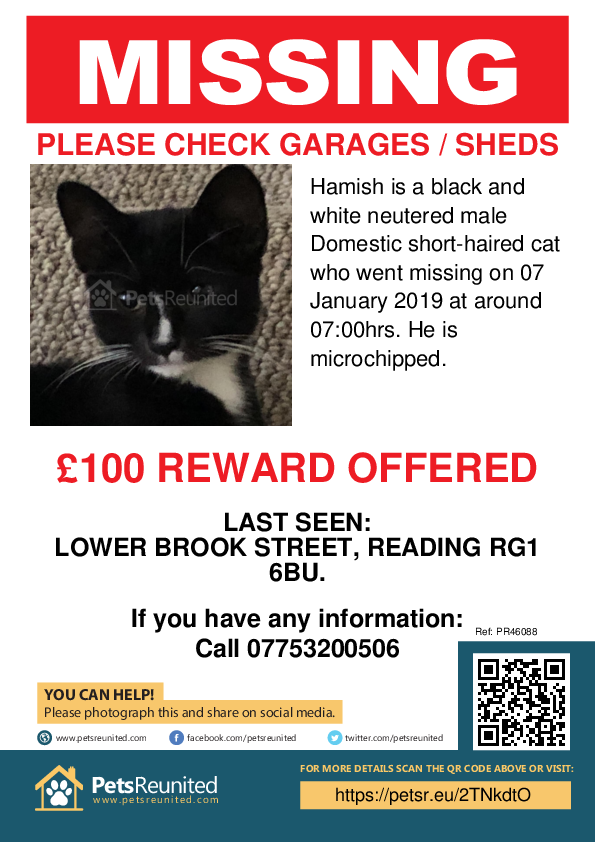 Lost pet poster - Lost cat: Black and white cat called Hamish
