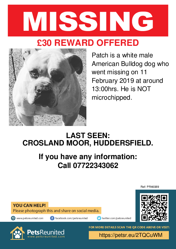 Lost pet poster - Lost dog: White American Bulldog dog called Patch
