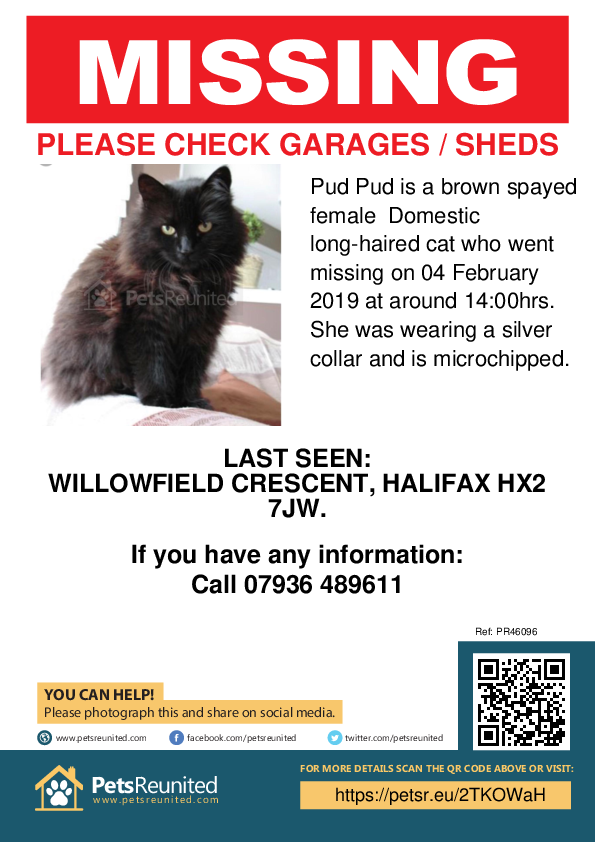 Lost pet poster - Lost cat: Brown cat called Pud Pud