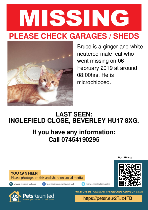 Lost pet poster - Lost cat: Ginger and white cat called Bruce
