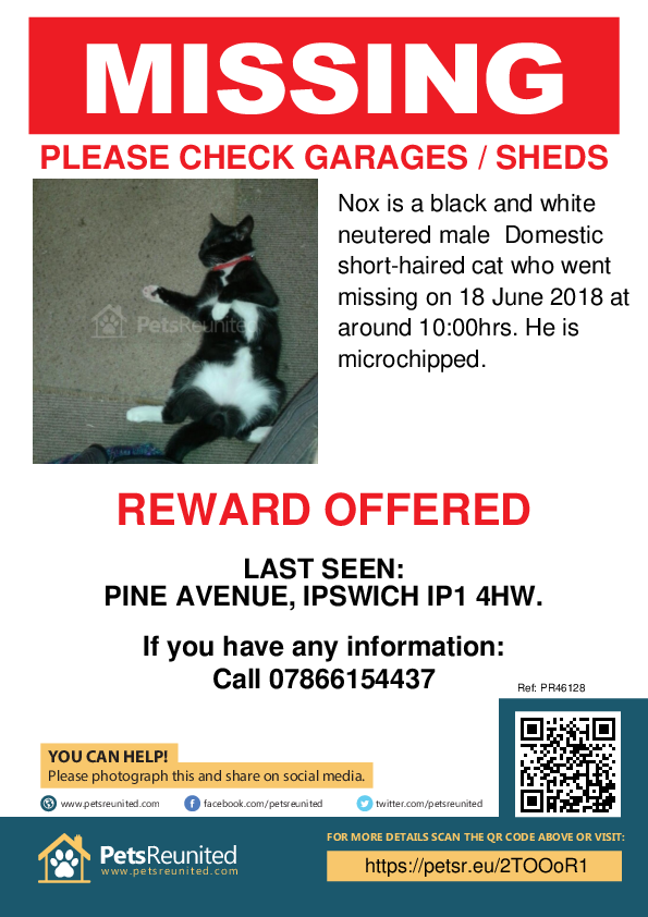Lost pet poster - Lost cat: Black and white cat called Nox