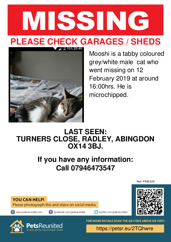 Lost pet poster - Lost cat: Tabby coloured grey/white cat called Mooshi