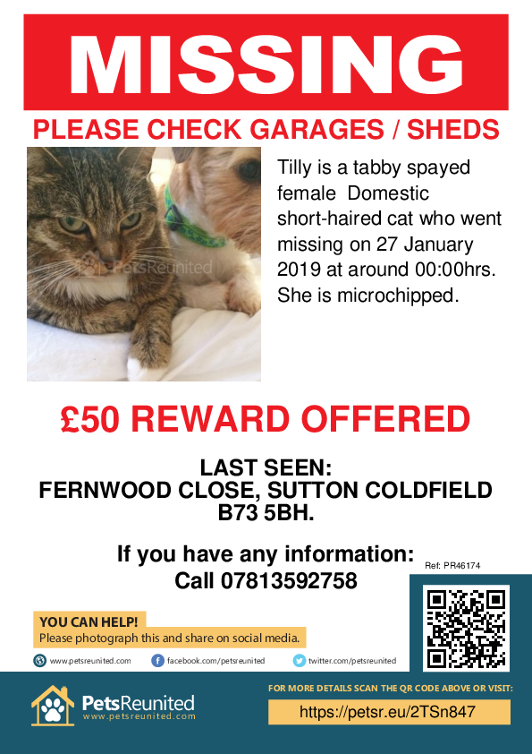 Lost pet poster - Lost cat: Tabby cat called Tilly