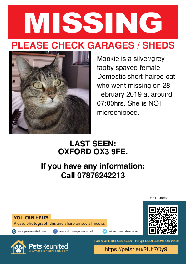 Lost pet poster - Lost cat: Silver/Grey Tabby cat called Mookie