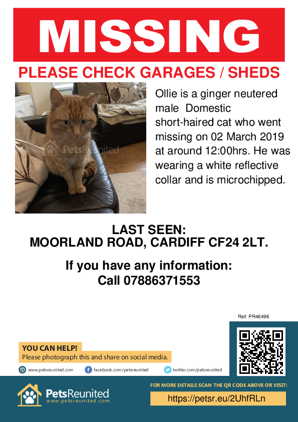 Lost pet poster - Lost cat: Ginger cat called Ollie