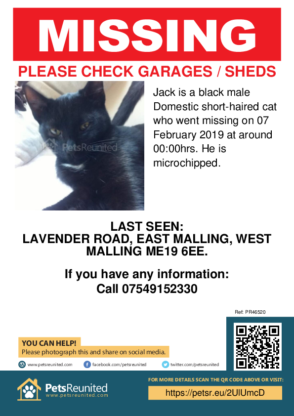 Lost pet poster - Lost cat: Black cat called Jack