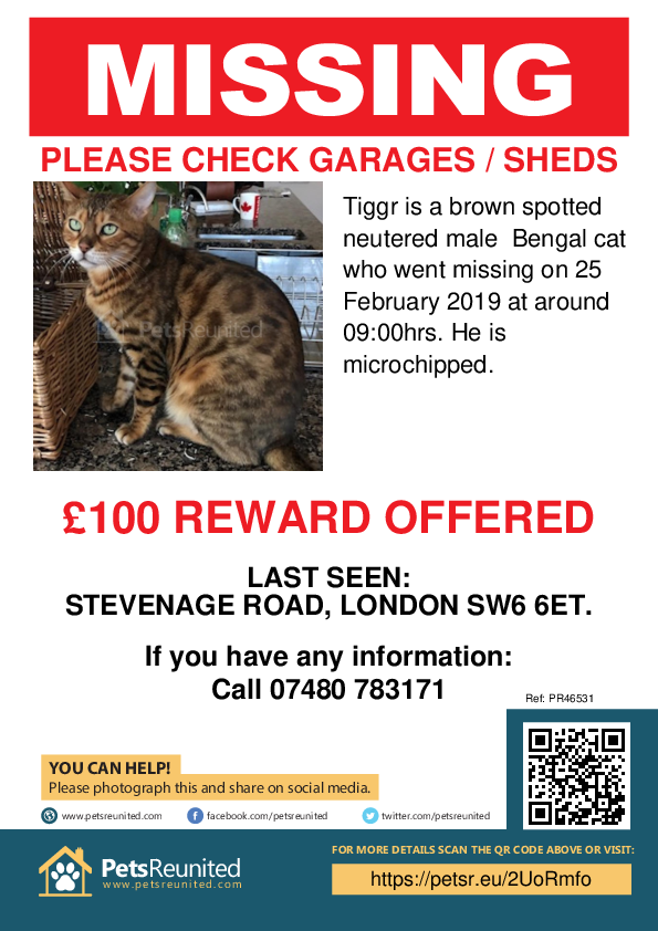 Lost pet poster - Lost cat: Brown Spotted Bengal cat called Tiggr