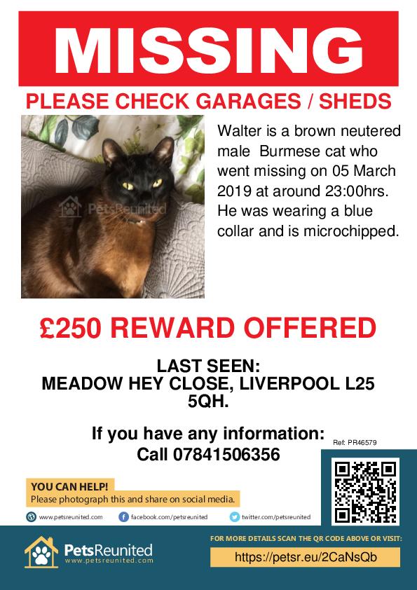 Lost pet poster - Lost cat: Brown Burmese cat called Walter