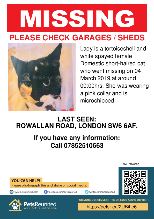 Lost pet poster - Lost cat: Tortoiseshell and white cat called Lady
