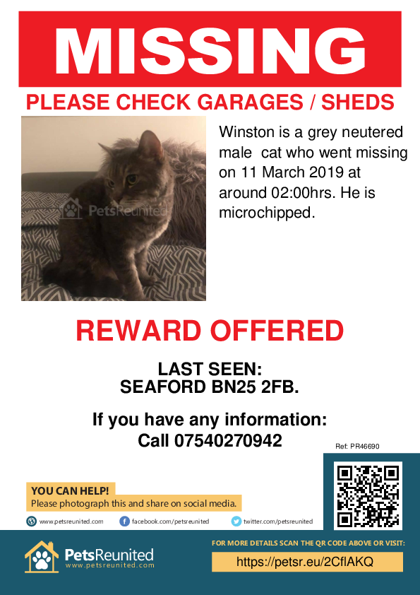 Lost pet poster - Lost cat: Grey cat called Winston