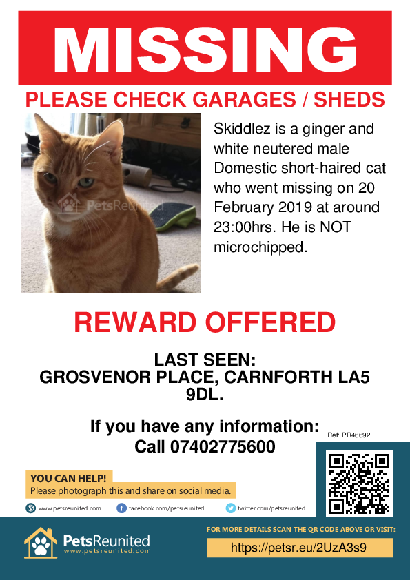 Lost pet poster - Lost cat: Ginger and white cat called Skiddlez