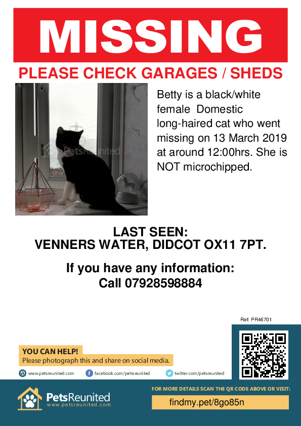 Lost pet poster - Lost cat: Black/White cat called Betty