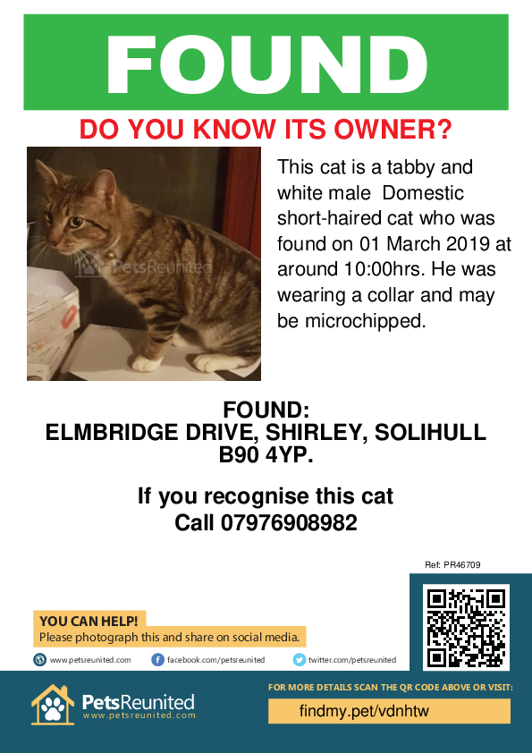 Found pet poster - Found cat: Tabby and white cat