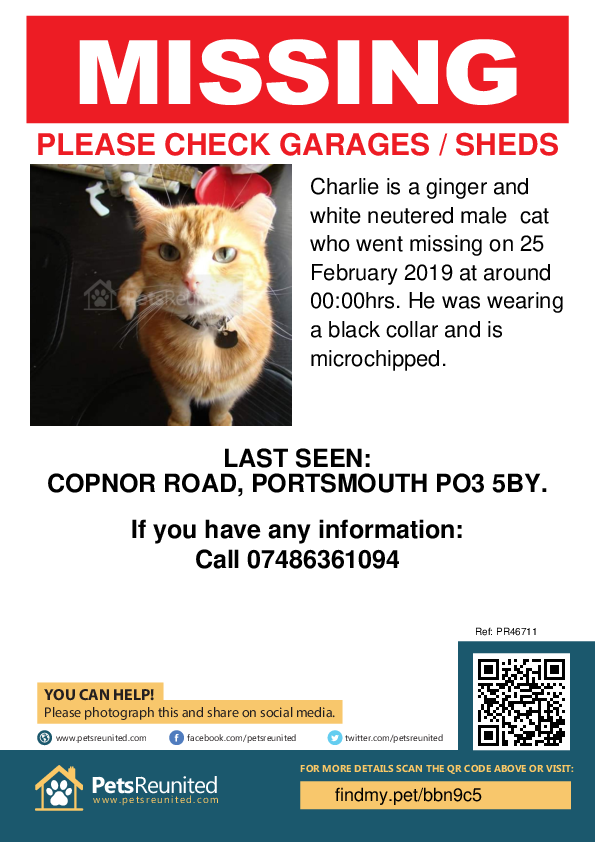 Lost pet poster - Lost cat: Ginger and white cat called Charlie