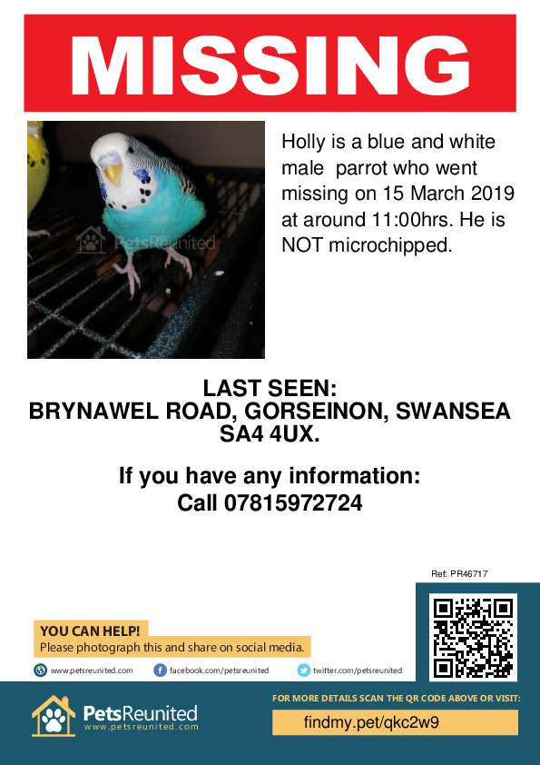 Lost pet poster - Lost parrot: Blue and white parrot called Holly