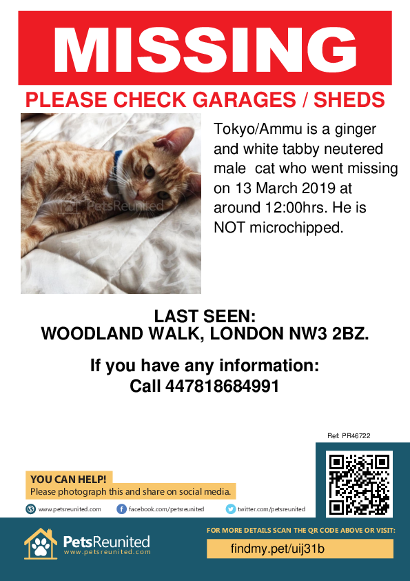 Lost pet poster - Lost cat: Ginger and white tabby cat called Tokyo/Ammu
