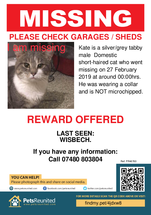 Lost pet poster - Lost cat: Silver/Grey Tabby cat called Kate