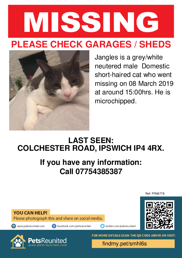 Lost pet poster - Lost cat: Grey/White cat called Jangles