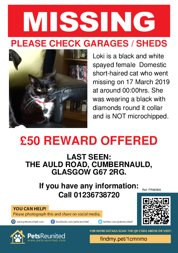 Lost cat: Black and white cat called Loki - Cumbernauld area, North