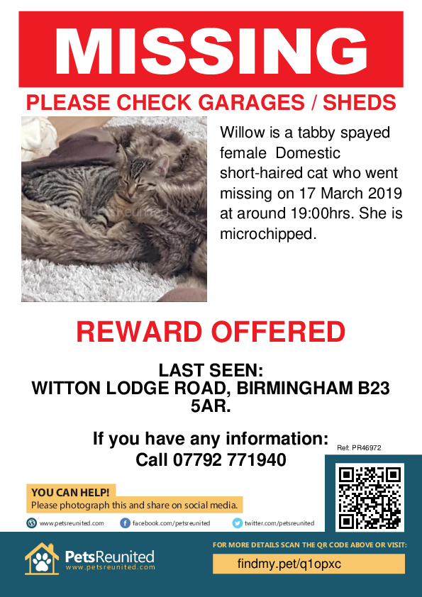 Lost pet poster - Lost cat: Tabby cat called Willow