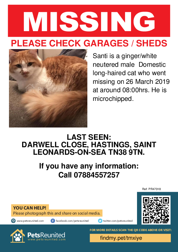 Lost pet poster - Lost cat: Ginger/White cat called Santi