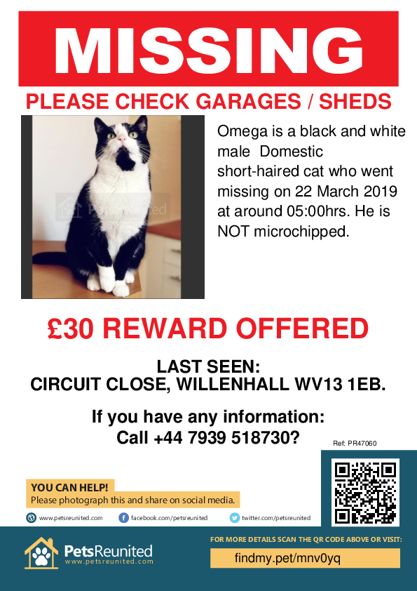 Lost pet poster - Lost cat: Black and white cat called Omega
