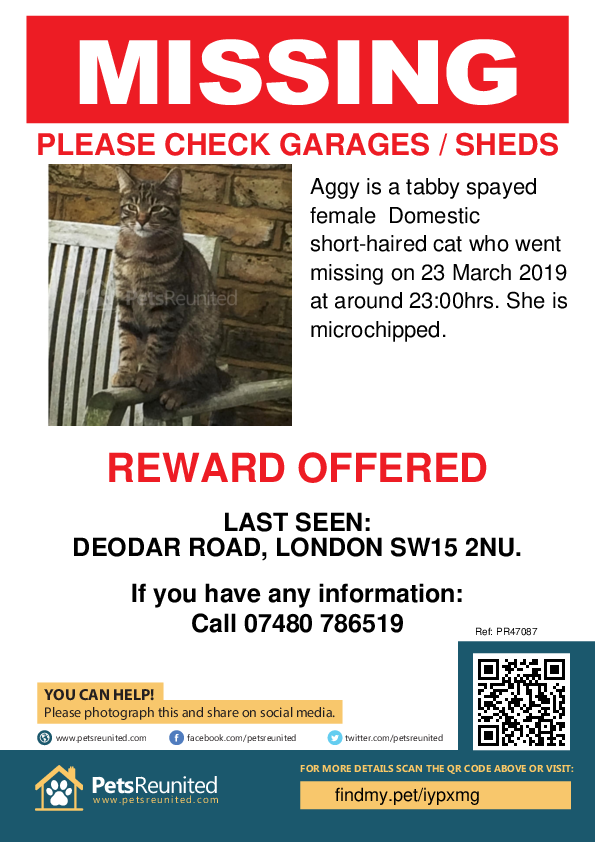 Lost pet poster - Lost cat: Tabby cat called Aggy