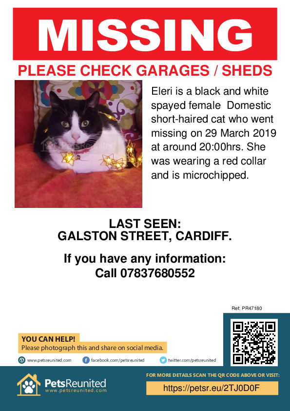 Lost pet poster - Lost cat: Black and white cat called Eleri