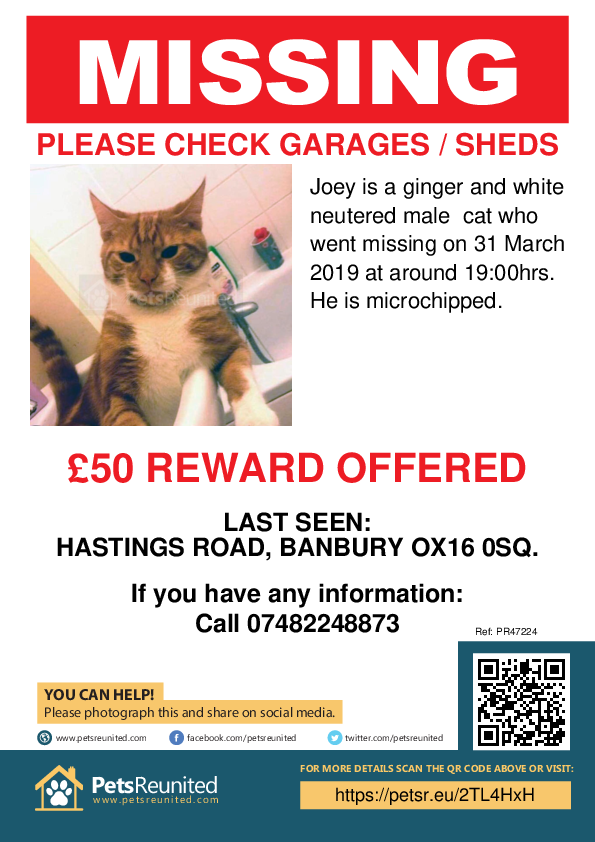Lost pet poster - Lost cat: Ginger and White cat called Joey