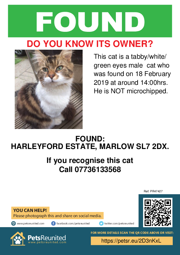 Found pet poster - Found cat: Tabby/White/ Green Eyes cat