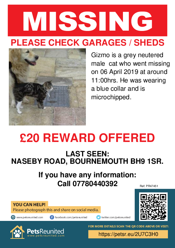 Lost pet poster - Lost cat: grey cat called Gizmo