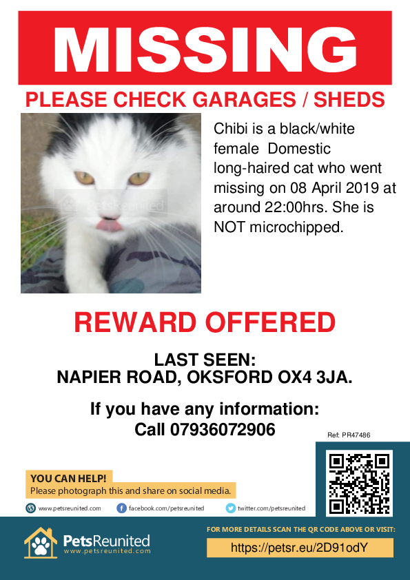 Lost pet poster - Lost cat: Black/White cat called Chibi