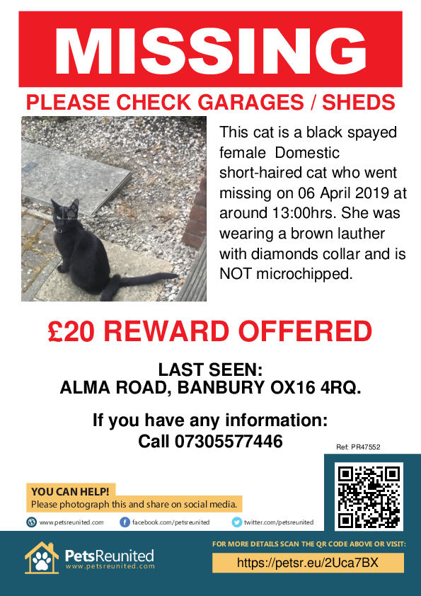 Lost pet poster - Lost cat: Black cat [name witheld]